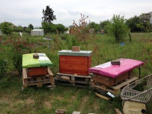 Bienenstand IKG - Umbau ist fertig