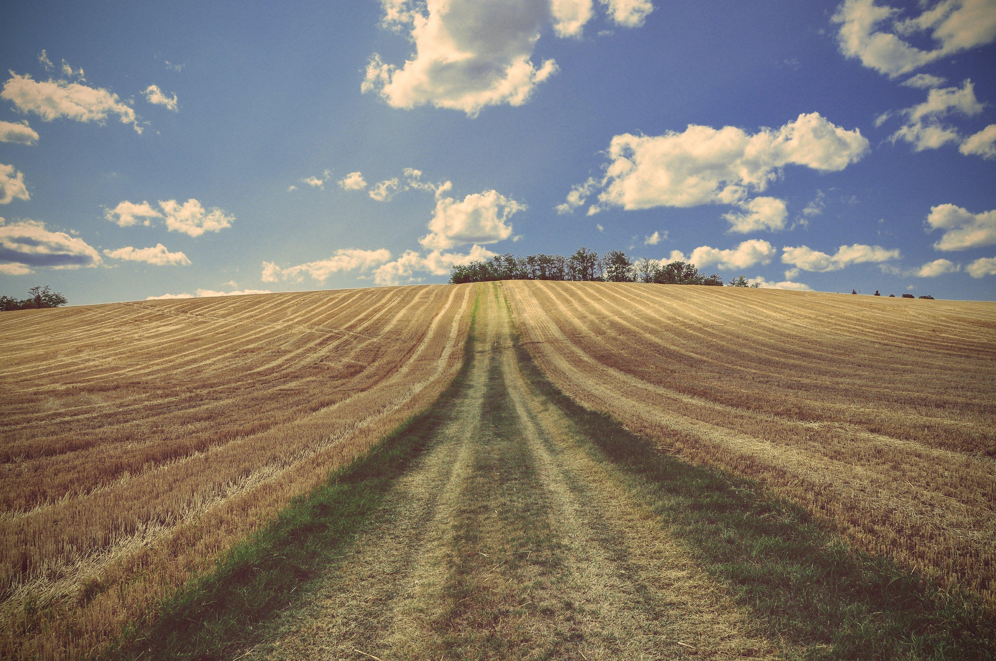 probleme industrielle landwirtschaft