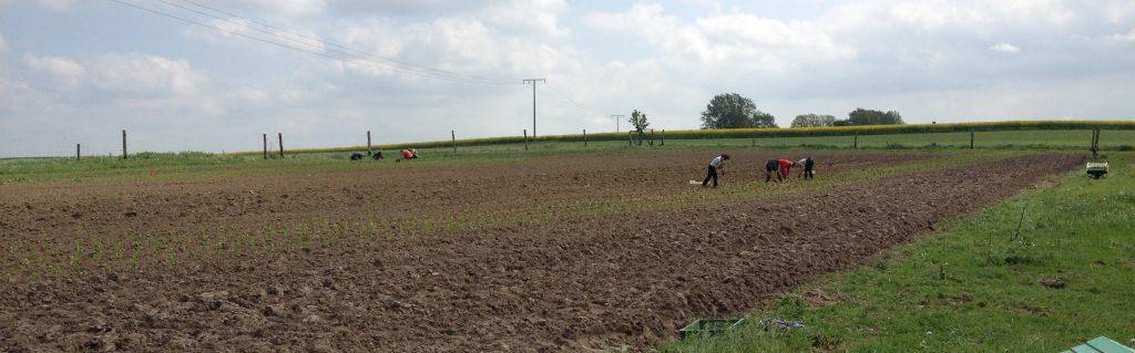Mitmachtag am vergangenen Samstag: Menschen pflanzen Pflanzen
