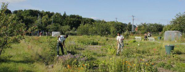 Gemeinschaftliches Gärtnern zwischen den Kulturen