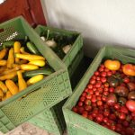 Ernteanteile Gemüse